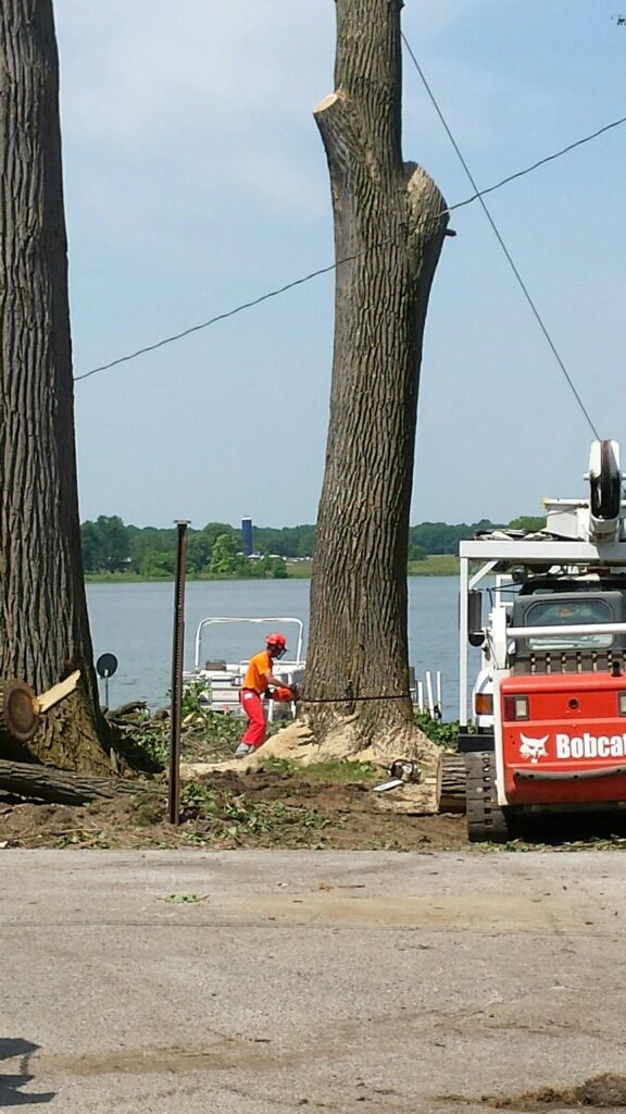 Silver Lake Tree Removal